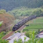 川根の茶畑を走るSL