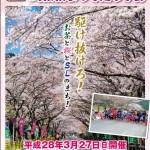 地域おこし協力隊も応援!「川根桜まつり走ろう会」!!