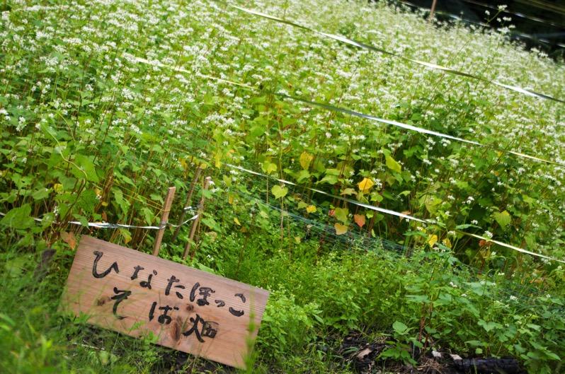 161013 ひなたぼっこ そばの花 3