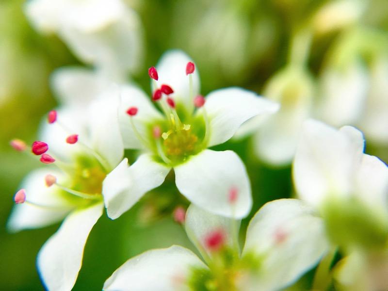 161013 ひなたぼっこ そばの花 4